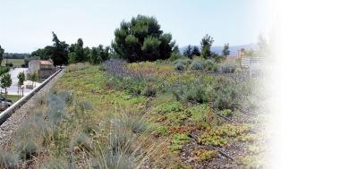 Isolation des toitures terrasses végétalisées
