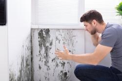 Moisissures nuisent à la qualité de l'air intérieur - ISOVER
